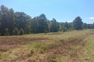 40+/- Acre Ouachita Mountain Hunting & Creek SEALED BID in Perry, AR (17 of 67)