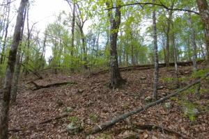 40+/- Acre Ouachita Mountain Hunting & Creek SEALED BID in Perry, AR (57 of 67)