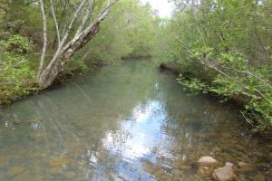 40+/- Acre Ouachita Mountain Hunting & Creek SEALED BID in Perry, AR (59 of 67)