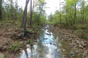 40+/- Acre Ouachita Mountain Hunting & Creek SEALED BID in Perry, AR (60 of 67)