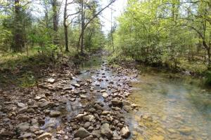 40+/- Acre Ouachita Mountain Hunting & Creek SEALED BID in Perry, AR (61 of 67)