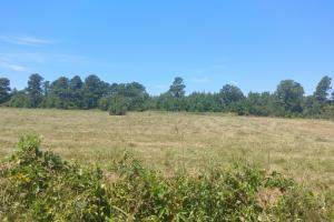 40+/- Acre Ouachita Mountain Hunting & Creek SEALED BID in Perry, AR (10 of 67)