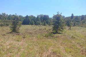 40+/- Acre Ouachita Mountain Hunting & Creek SEALED BID in Perry, AR (26 of 67)