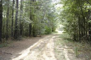 120 ac Hunting and Timber Land near Winona, MS - Montgomery County, MS
