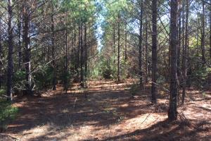 160 Acres in Grenada County - Grenada County MS