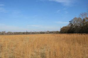 Goodman Pasture Land - Holmes County MS