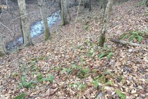 Timber and Recreational Tract in Attala County - Attala County MS