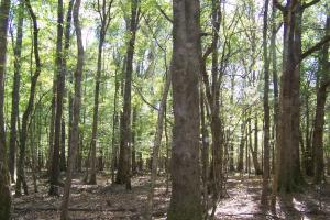 River hunting and timber investment with great access in Attala, MS (26 of 38)