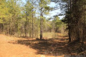 River hunting and timber investment with great access in Attala, MS (31 of 38)