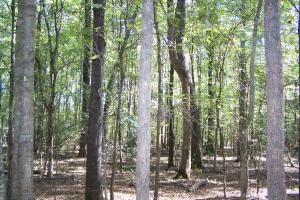 River hunting and timber investment with great access in Attala, MS (21 of 38)