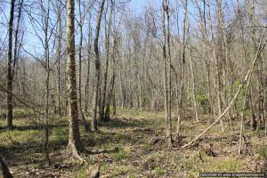 River hunting and timber investment with great access in Attala, MS (34 of 38)