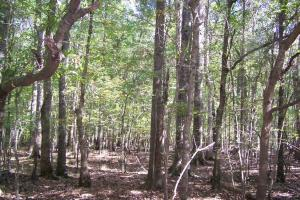 River hunting and timber investment with great access in Attala, MS (20 of 38)