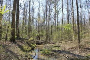 River hunting and timber investment with great access in Attala, MS (35 of 38)