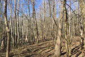 River hunting and timber investment with great access in Attala, MS (8 of 38)