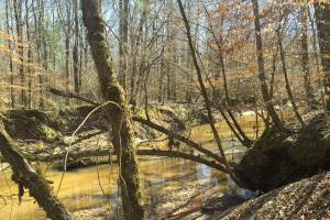 River hunting and timber investment with great access in Attala, MS (7 of 38)
