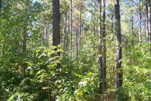 River hunting and timber investment with great access in Attala, MS (3 of 38)