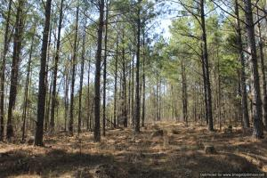 River hunting and timber investment with great access in Attala, MS (37 of 38)
