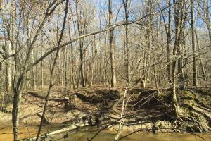 River hunting and timber investment with great access in Attala, MS (13 of 38)