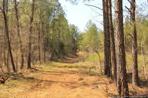 River hunting and timber investment with great access in Attala, MS (38 of 38)