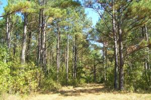 River hunting and timber investment with great access in Attala, MS (5 of 38)