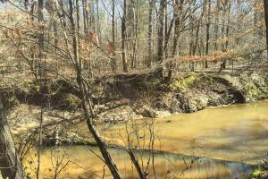 River hunting and timber investment with great access in Attala, MS (4 of 38)