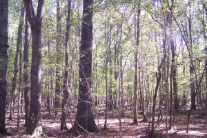 River hunting and timber investment with great access in Attala, MS (25 of 38)