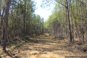 River hunting and timber investment with great access in Attala, MS (33 of 38)