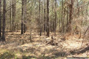 River hunting and timber investment with great access in Attala, MS (32 of 38)