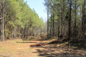 River hunting and timber investment with great access in Attala, MS (29 of 38)
