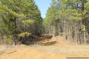 River hunting and timber investment with great access in Attala, MS (36 of 38)