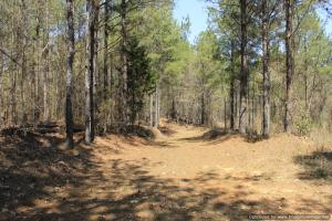 River hunting and timber investment with great access in Attala, MS (28 of 38)