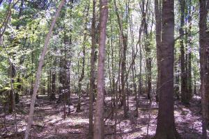 River hunting and timber investment with great access in Attala, MS (24 of 38)