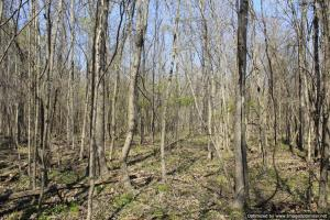 River hunting and timber investment with great access in Attala, MS (30 of 38)