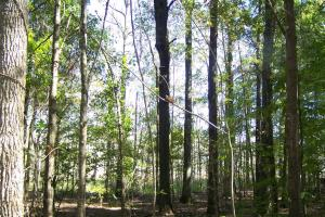 River hunting and timber investment with great access in Attala, MS (23 of 38)