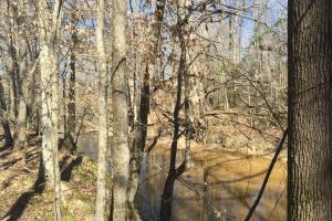 River hunting and timber investment with great access in Attala, MS (10 of 38)
