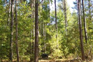 River hunting and timber investment with great access in Attala, MS (18 of 38)
