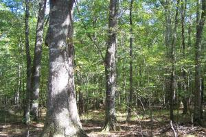 River hunting and timber investment with great access in Attala, MS (22 of 38)