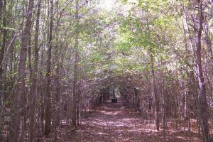River hunting and timber investment with great access in Attala, MS (17 of 38)