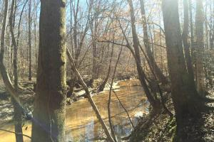 River hunting and timber investment with great access in Attala, MS (12 of 38)