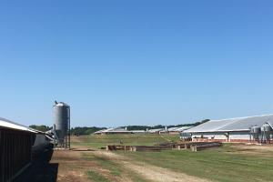 Poultry Farm with Stable Income and Square Footage Contract in Chesterfield, SC (3 of 6)