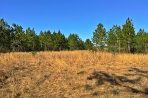 Gateswood Homesite and Recreational Tract - Baldwin County AL