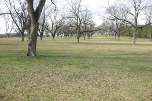 Clayton Estate with Pecan Orchard in Barbour, AL (6 of 17)