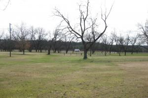 Clayton Estate with Pecan Orchard in Barbour, AL (5 of 17)