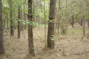 12.2 acre hunting tract near Weir, MS - Choctaw County MS