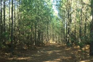 Bull Skull Road Hunting and Timber Investment - Colbert County AL
