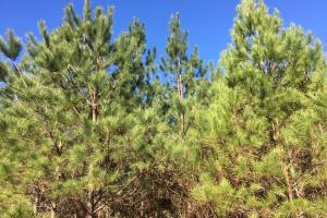 Evergreen Hunting/Timberland Investment - Conecuh County, AL