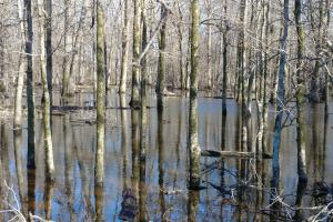 Duck Woods and Deer Hunting Close to Little Rock - Lonoke County AR