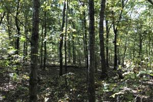 47+/- Acres Timberland & Hunting Land in Jackson, AR (23 of 23)