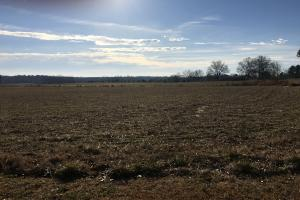 Income Producing Farm  - Calhoun County MS