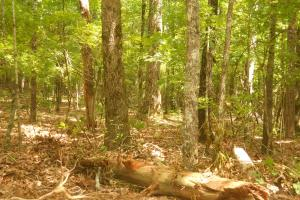 118 acres of Hunting & Timber Investment - Montgomery County MS